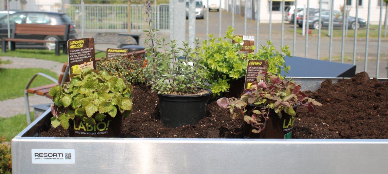 Kräuter und Pflanzen ausrichten auf Pflanzdach von Mülltonnenbox - RESORTI