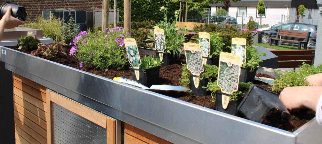 muelltonnenboxen-bepflanzen-tipps-titel-resorti